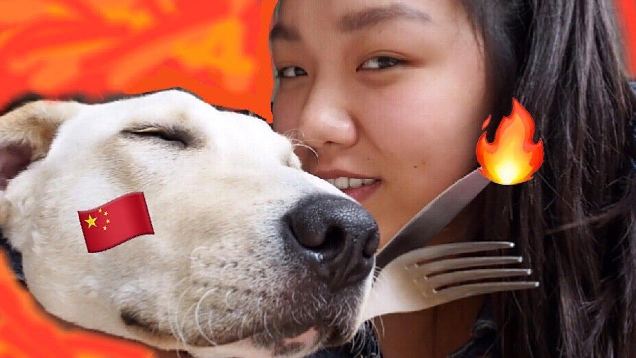 Femmes célibataires avec un chien dialoguer